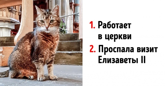 Коты, которые трудятся, несмотря на то что у них лапки