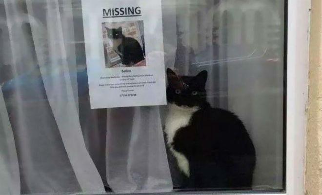 Кот ушел и мужчина пошел его искать. Кот нашелся, а через неделю домой вернулся еще один кот Культура