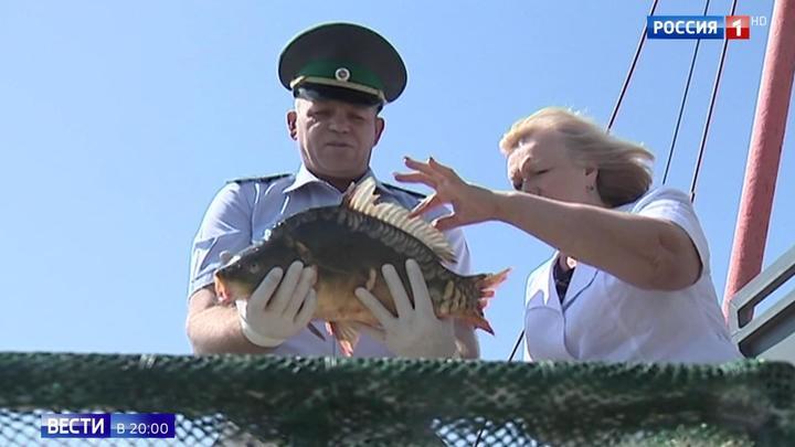 Не больше 5 килограммов: в РФ вводятся ограничения на любительскую рыбалку