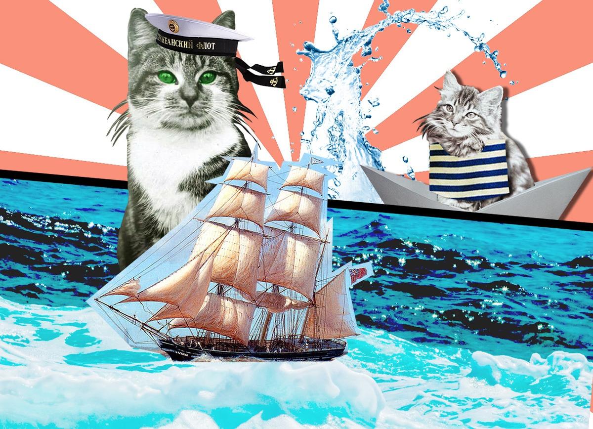 Матроскин не выдумка: пять историй знаменитых котов-мореходов