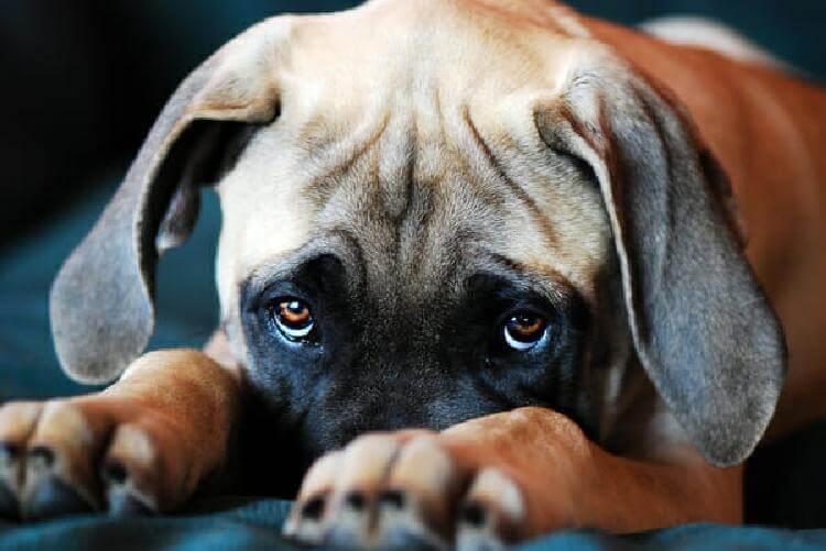 Вот почему собаки сопровождают вас в ванную комнату. Причина гораздо серьезнее, чем вы думаете