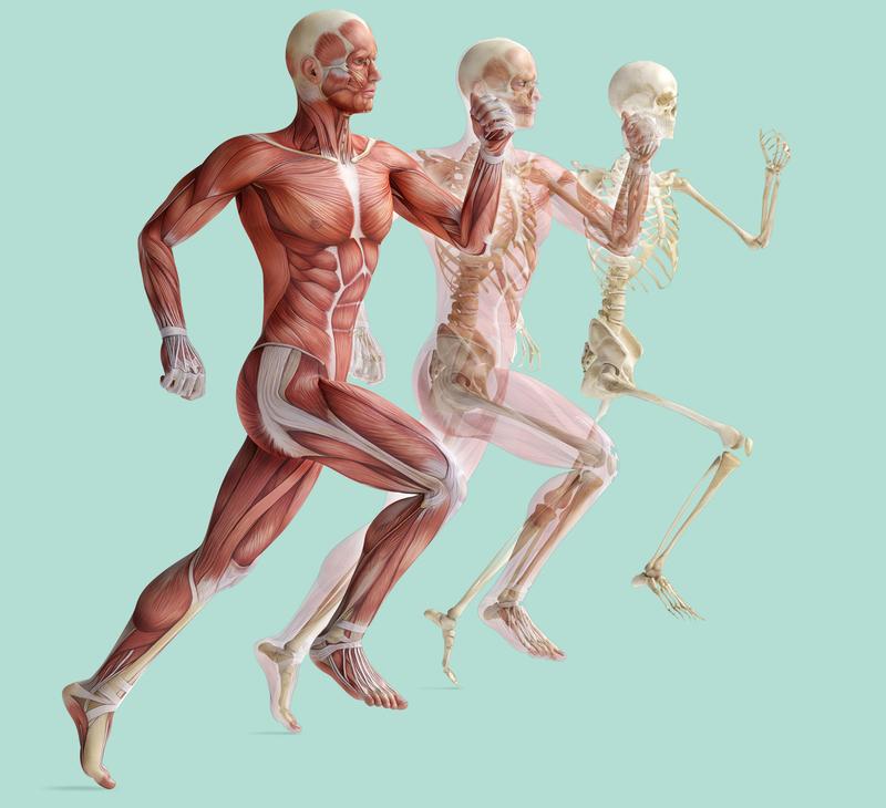 Вот почему для похудения лучше больше ходить, чем бегать