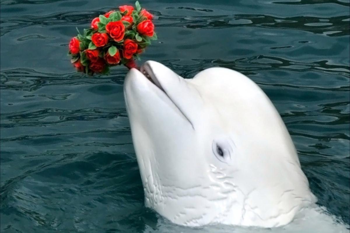 Поздравления днем, открытка с дельфином днем рождения