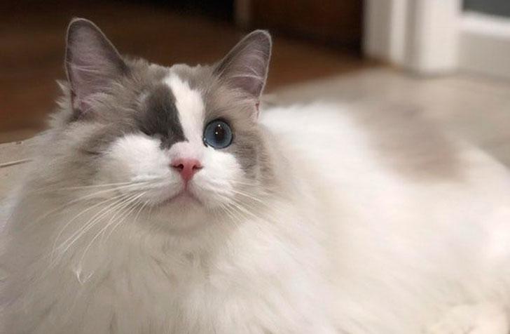 Семья хотела усыпить кота за то, что он был «слишком игривый»