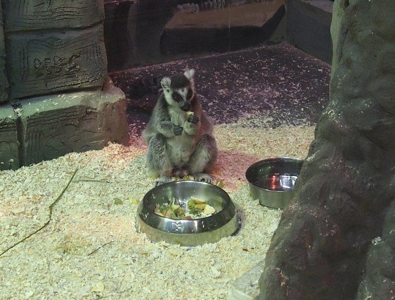 Однажды в Ярославском зоопарке