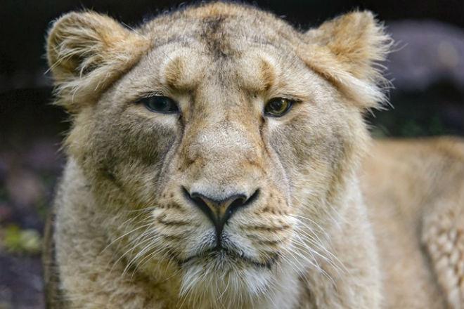 Львица упала в глубокий колодец и люди пришли на помощь заповедник,львица,люди пришли на помощь львице,охотник,Пространство,спасатели