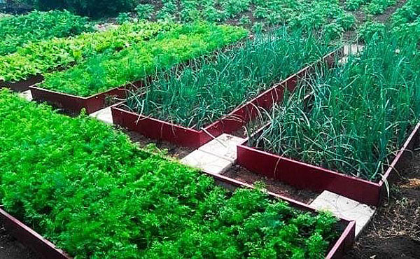 Неотразимый дизайн садового участка с оцинкованными грядками