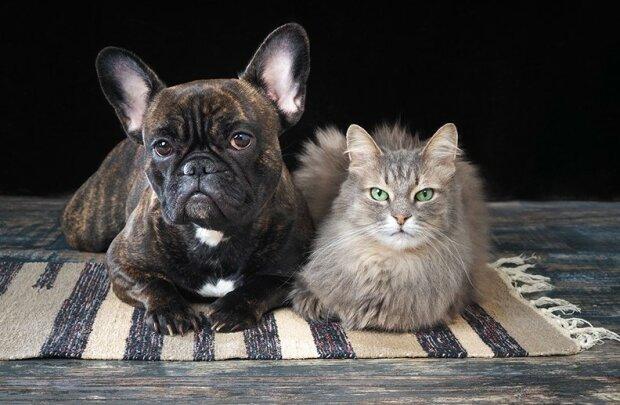 В сети смеются над «баттлом» между котенком и щенком