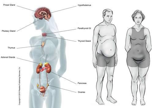 5 продуктов которые вызывают гормональный дисбаланс. Вы должны это знать.