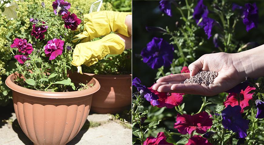 Что нужно обязательно сделать в июле с контейнерными цветами, чтобы они шикарно цвели до осени дача,сад и огород,цветоводство