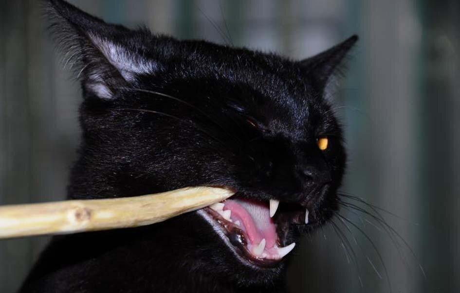 Зуля – чёрт из «табакерки» животные,Истории из жизни,позитив
