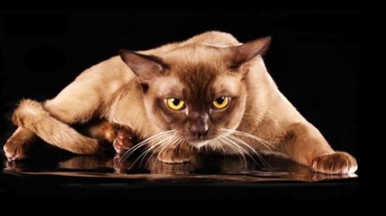 КОШКИН ДОМ. Кошки в истории