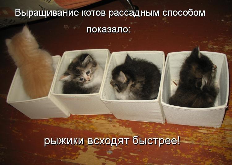 Прикольные картинки с надписями ржачные про котов и кошек, анимированная