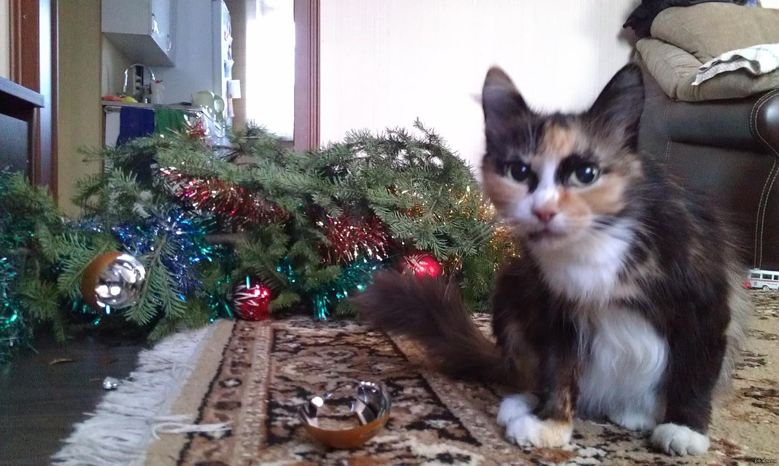 коты и елки прикольные фото фасон особенно востребован