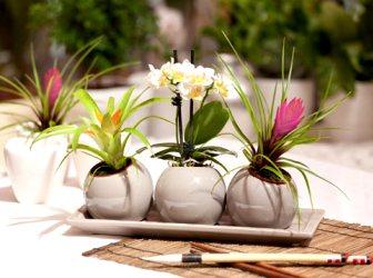 Ошибки ухода за комнатными растениям