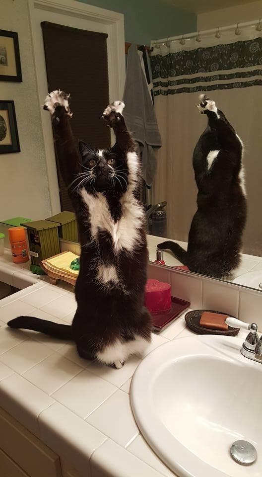 """""""Это то, что любит делать кот моих друзей"""" кошки, приколы, прикольные фото животных, смешные кошки"""