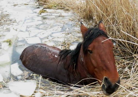 В Омской области похищенного коня бросили умирать в ледяной трясине