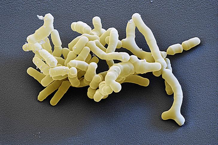 Управляющая компания: как бактерии руководят людьми бактерии,медицина,человек