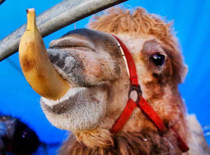 Порция интересных  фото о жизни животных<span>Вы должны это увидеть!</span>