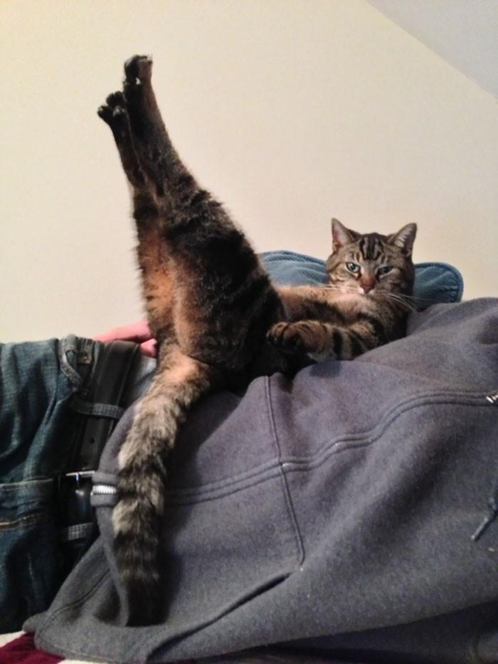 Pin-up кошка кошки, приколы, прикольные фото животных, смешные кошки