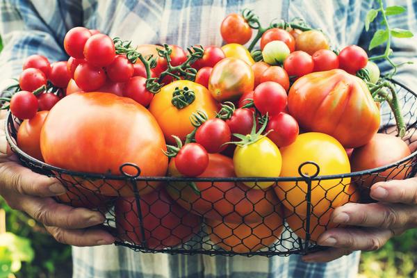Какой томат самый вкусный: обзор проверенных сортов и гибридов   Источник: https://7dach.ru/Uleyskaya/kakoy-tomat-samyy-vkusnyy-obzor-proverennyh-sortov-i-gibridov-164219.html