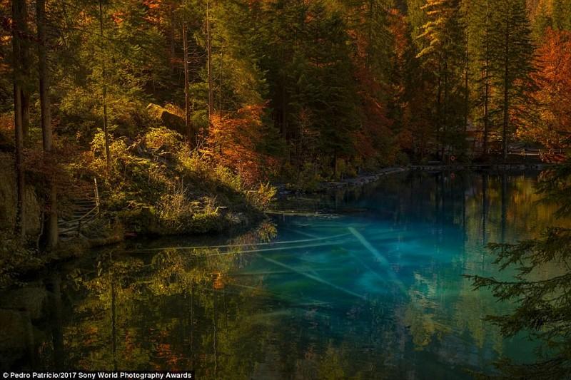Лесное озеро в горах Швейцарии. Фотограф - Бернс Оберланд искусство, конкурс, красота, фото