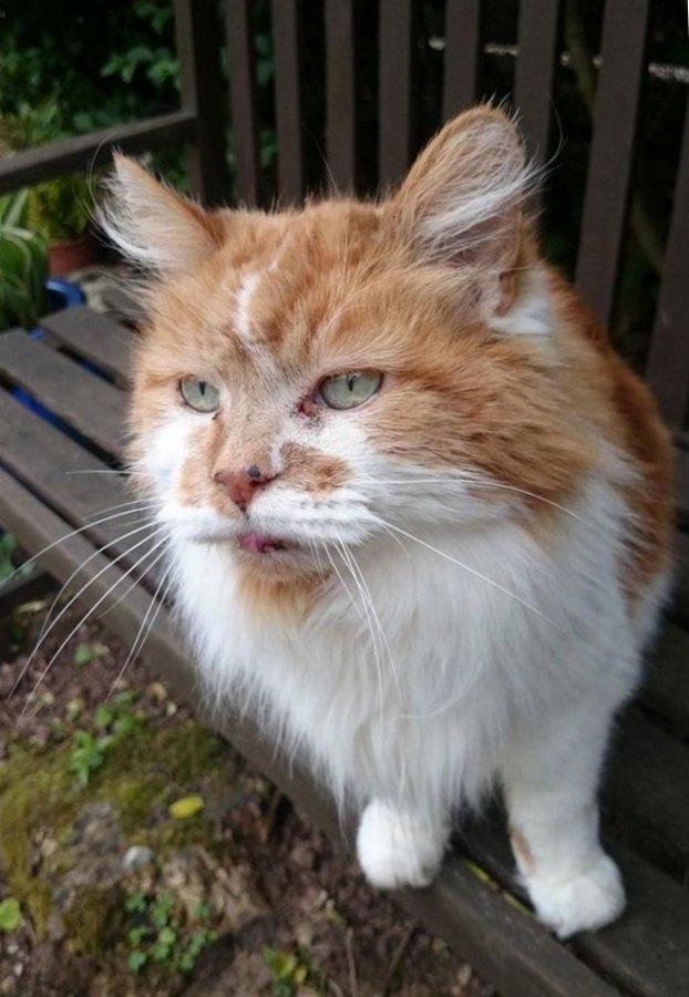 Кот-долгожитель по кличке Ра…