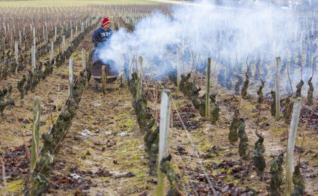 Задымление виноградника