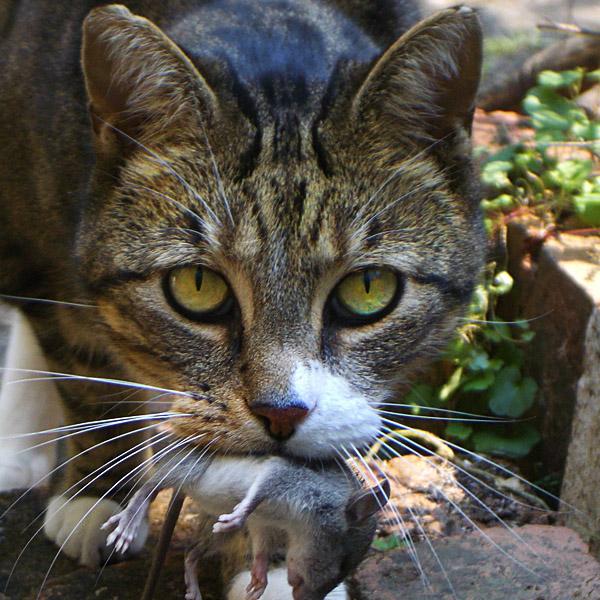 История о коте, пришедшим на…