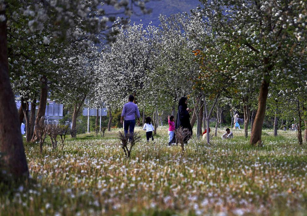 Наступила весна в Исламабаде, Пакистан