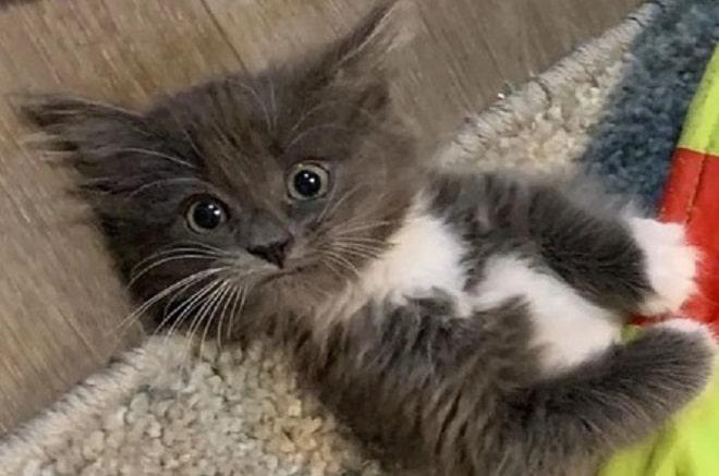 Удивленный котенок