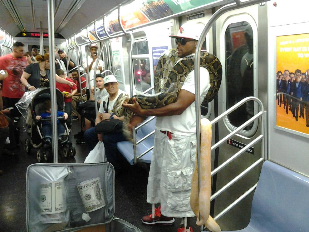 Смешная стрелочница метро картинки