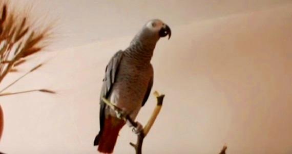 Это попугай-сказочник! Тольк…