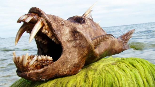 Существа из глубин океана словно пришли с другой планеты