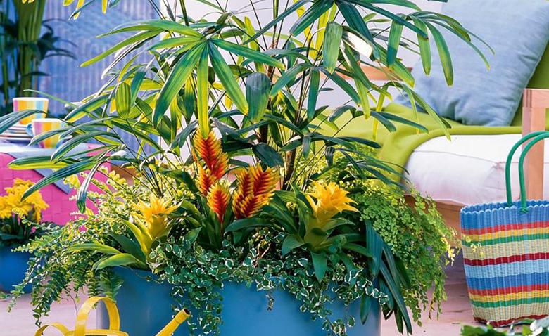 Зимние композиции из горшечных растений