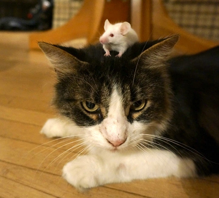кот и мыши картинки фото можно