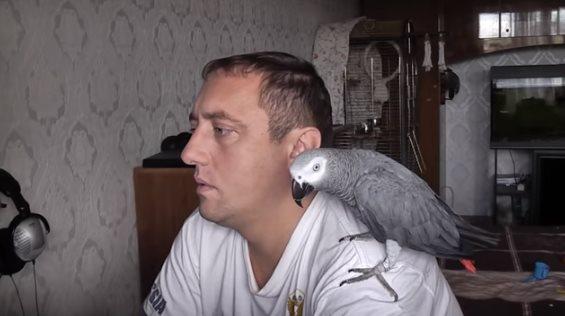 Говорящий попугай послал своего хозяина! Научили на свою голову!