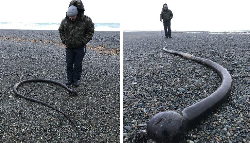 На Чукотском полуострове обнаружили огромных «морских змей»