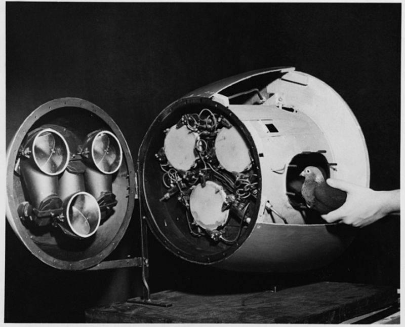 Ракета голубиной почтой. Проект «Голубь» оружие