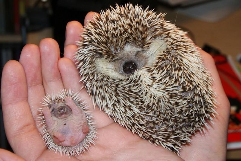 18 очаровательных новорожденных животных, которые растопят ваше сердце
