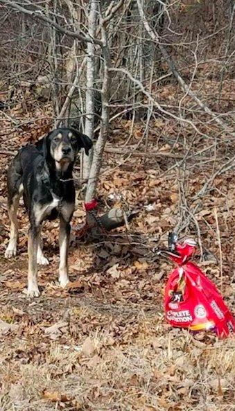 Пёс был привязан к дереву и оставлен в лесу… С пакетом корма и важной запиской!