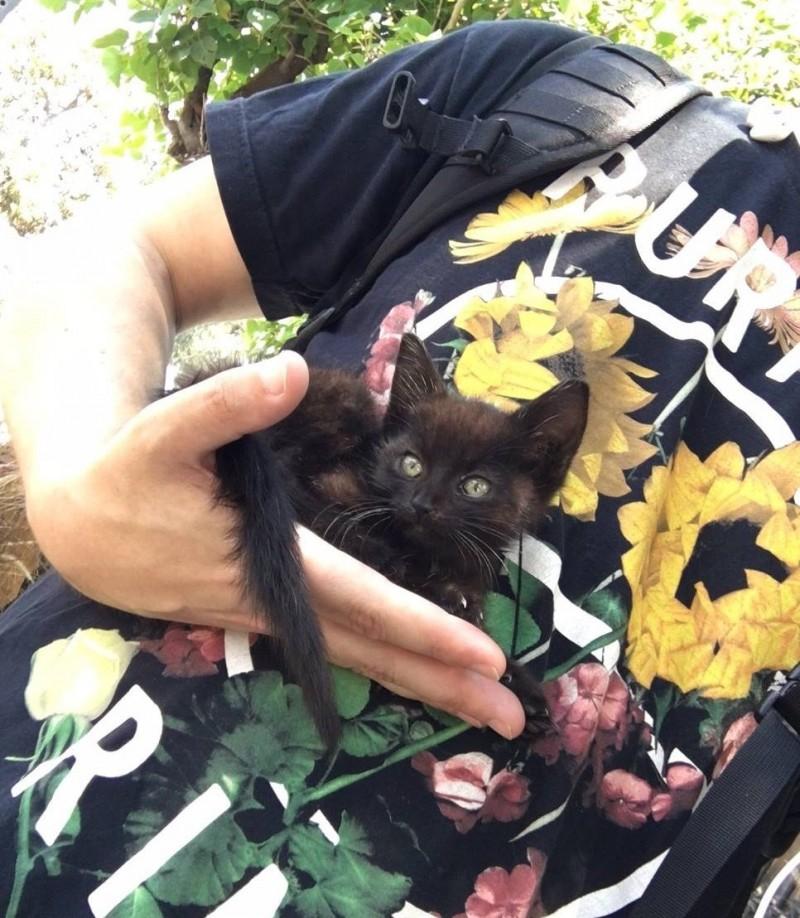 Пара спасла с улицы котенка,…