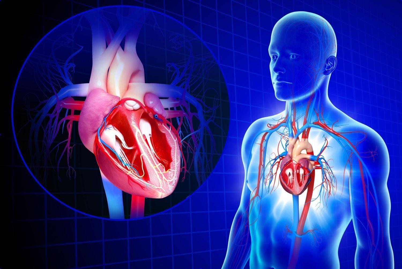 Инфекции, от которых страдает сердце заболевания, происходит, миокардита, сердца, развивается, употреблении, миокарда, инфекция, миокарде, миокард, нередко, поражение, миокардит, сердце, организму, Человек, инфекционного, человека, развитие, Заражение