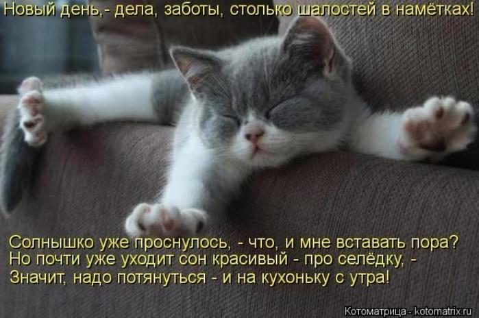 Котомашки и котоваськи)