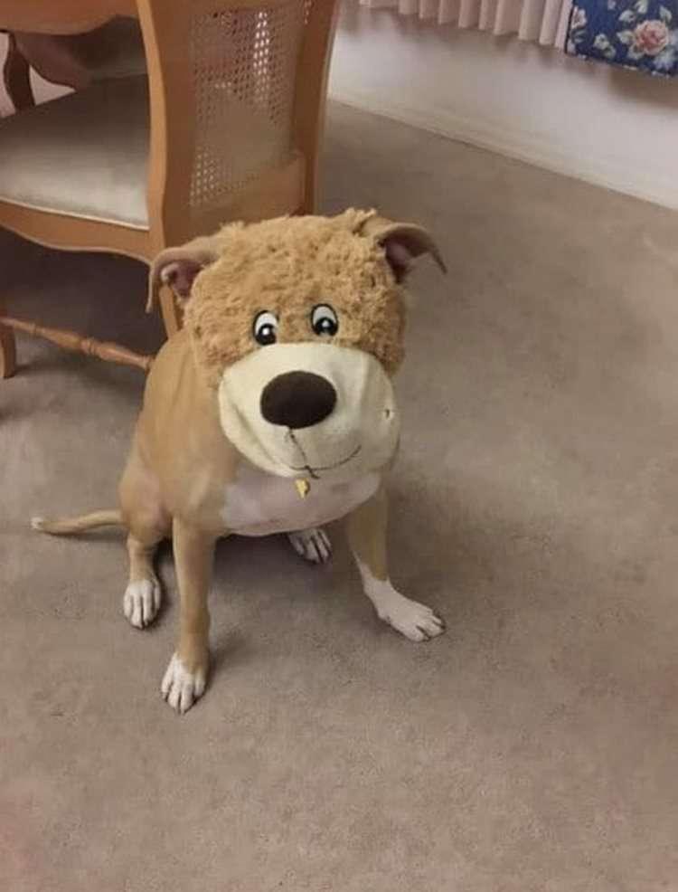 20 незадачливых собак, которые сами не знают, как так получилось супер