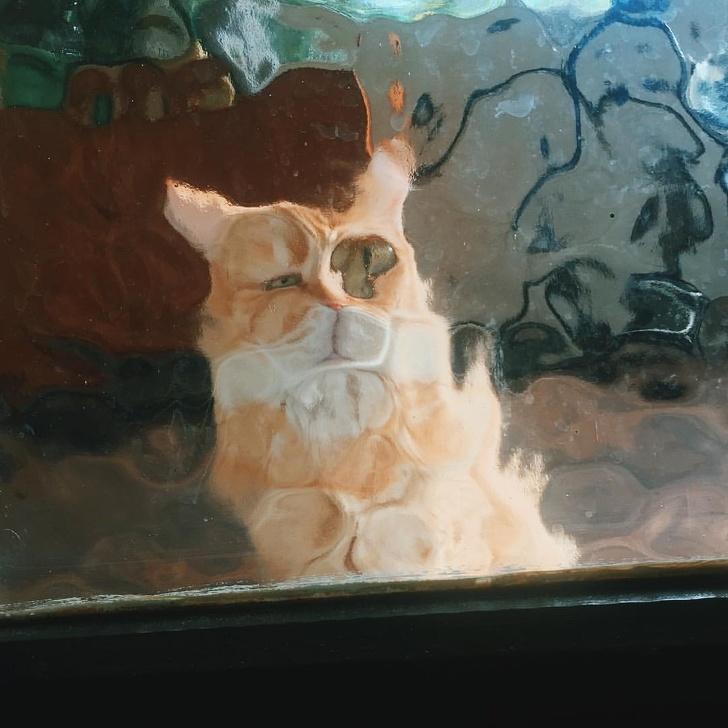 И вновь о наших душечках - о котах и кошечках...