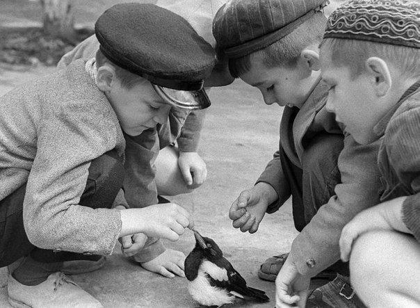 Дети играют с сорочонком. CCCР, 1965 год СССР, детство, ностальгия, подборка