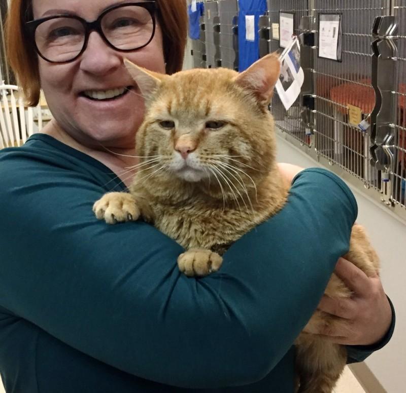 """Попавший в приют огромный бродячий кот поразил людей своим """"разговором"""" с человеком"""
