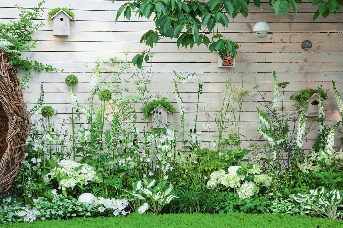 Красота без границ: что посадить в проблемной зоне возле стен дома