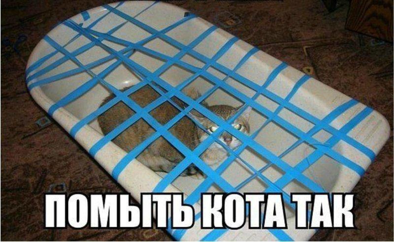 И кота помыть без угрозы для жизни Синяя изолента, Фабрика идей, кулибины, умельцы, юмор